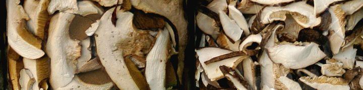passatelli con funghi porcini secchi e mazzancolle