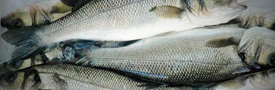 branzino per il pesce all'acqua pazza