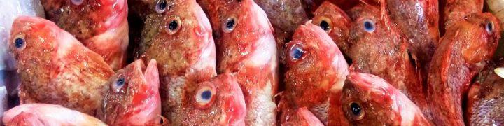 Sugo di pesce